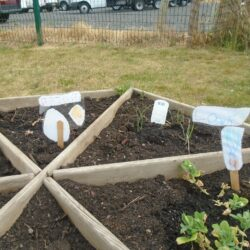 Planting patch